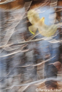 Flight by Ramona du Houx