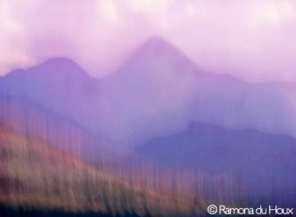 Purple Mt. Majesty