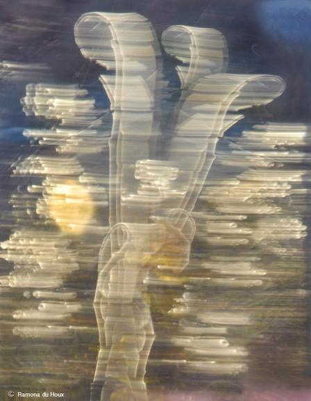 Ramona du Houx_X-ray_18 x 24_$300
