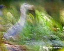 Heron Merge2